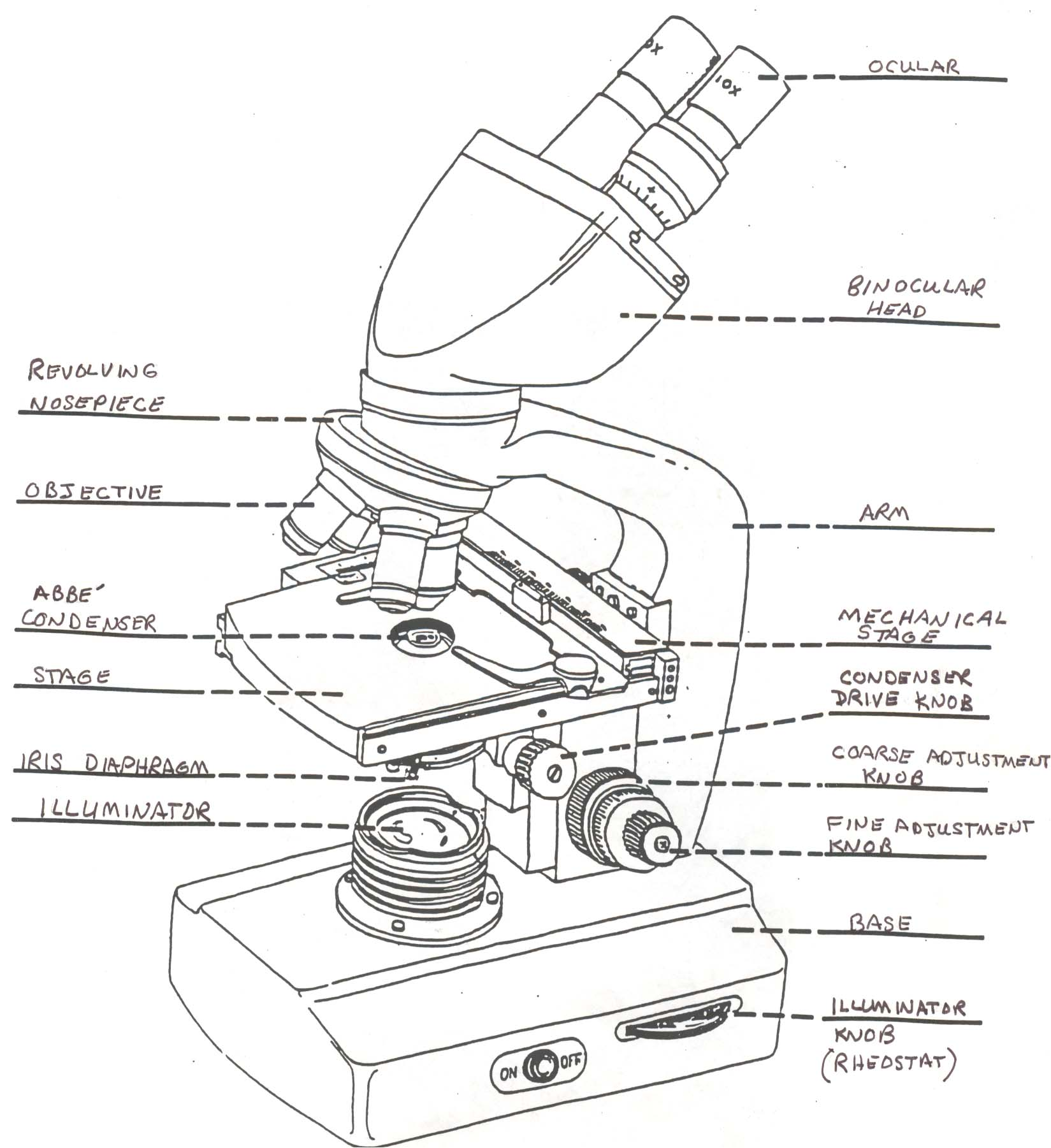 Worksheets Microscope Lab Worksheet sfcc biology 160 documents microscope drawing labeled